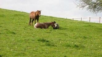 le Centaure de Lamaurelle - Dolmayrac