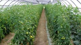 La ferme d'Al Souysse - Laroque-Timbaut