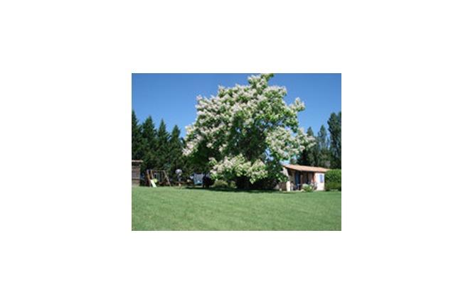 La Grange du Cheval Blanc T3 Les Mas 9 - Villeneuve-sur-Lot